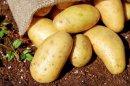 Abnehmerfolge dank der Kartoffel-Diät