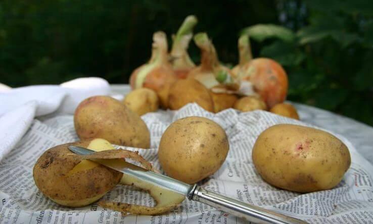 Frühkartoffeln immer mit Schale essen