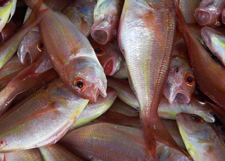 Dukan-Diät & Fisch