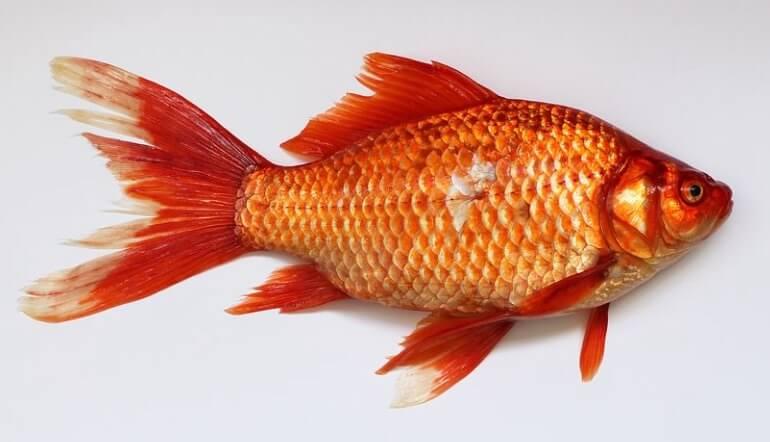 Fisch während der 21 Tage Stoffwechselkur