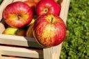 Apfel Diät - schlank durch Obst
