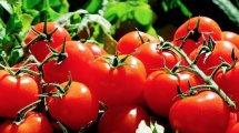 Abnehmen mit der Tomaten Diät