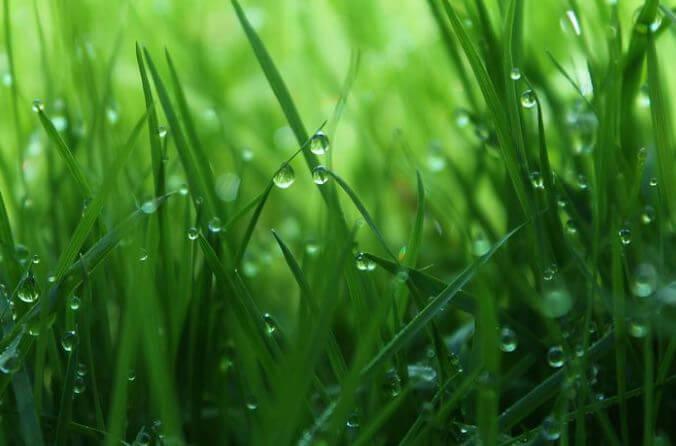Gerstengras - reich an Vitalstoffen