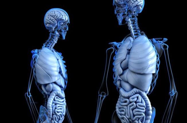 Leber Diät bei einer kranken Leber