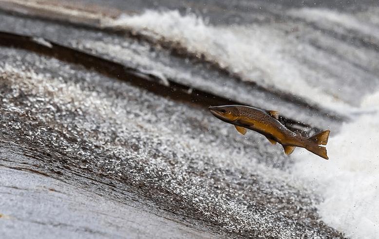 Hashimoto Diät: Nicht zu viel Fisch